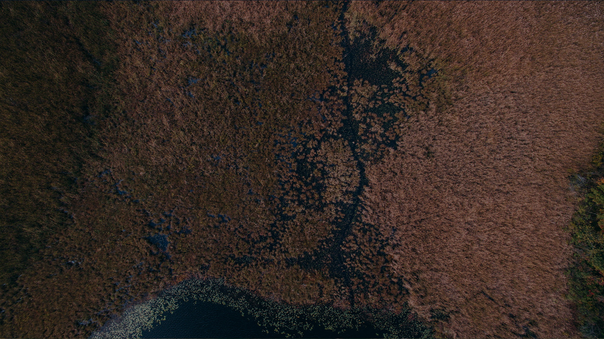 drone image of forest