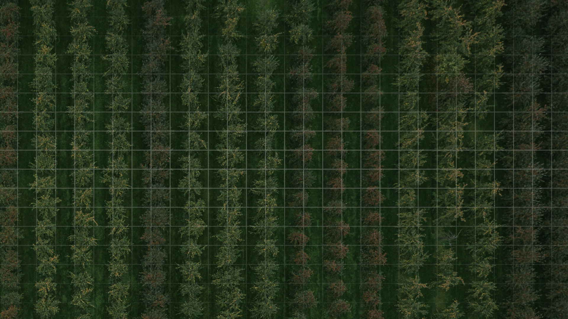 bird eye view of tree farm