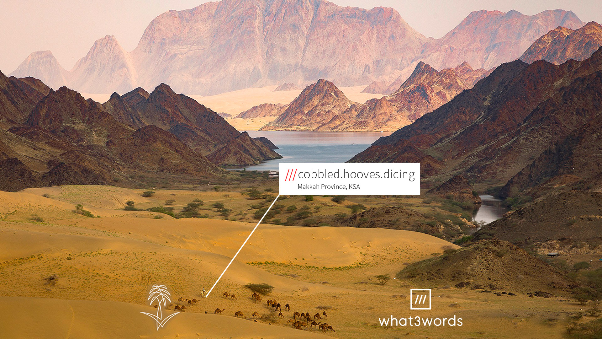 camels in desert with red mountains in background at 3 word address cobbled.hooves.dicing