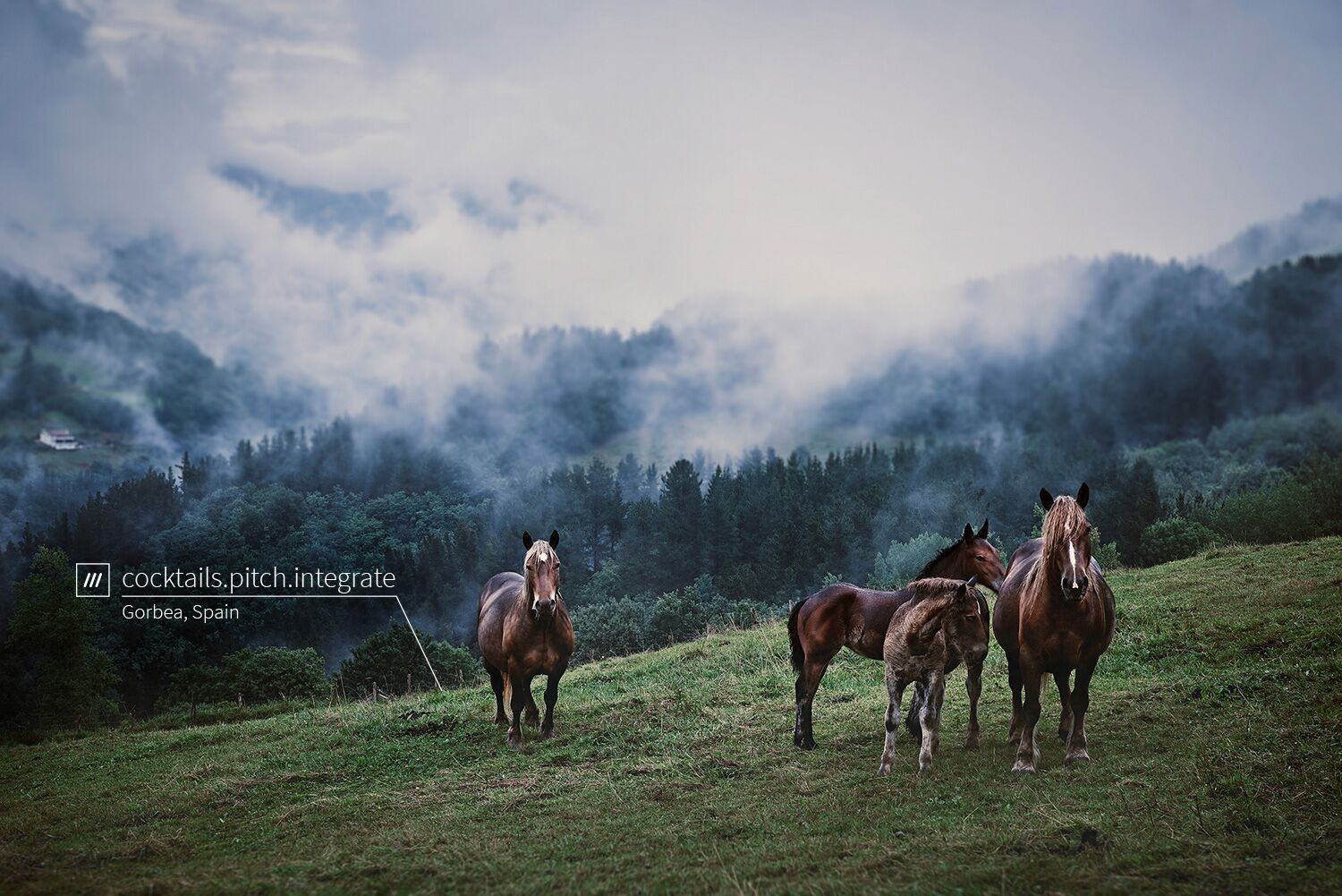 wild horses in a field surrounded by forests