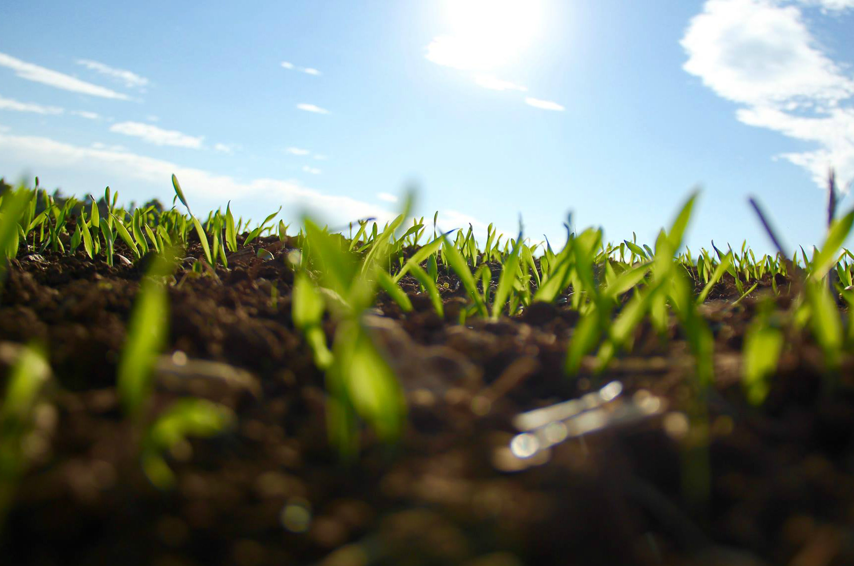 closeup photo of grass growing out the earth