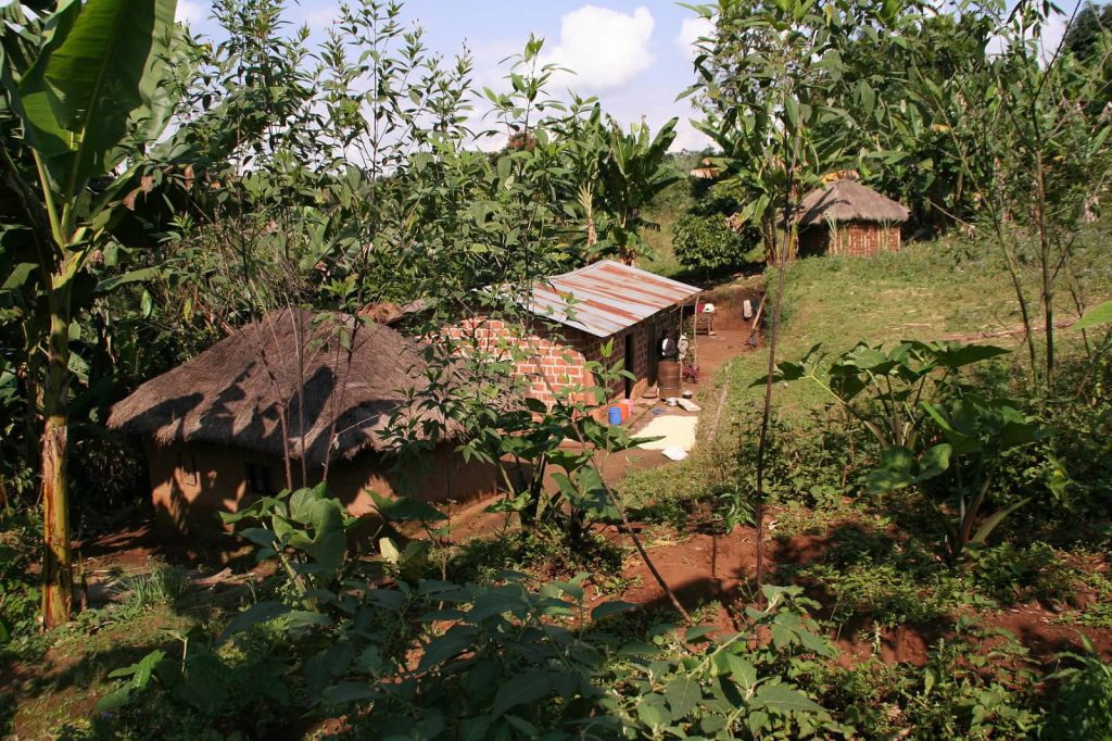 manmade small houses in a field surrounded by trees