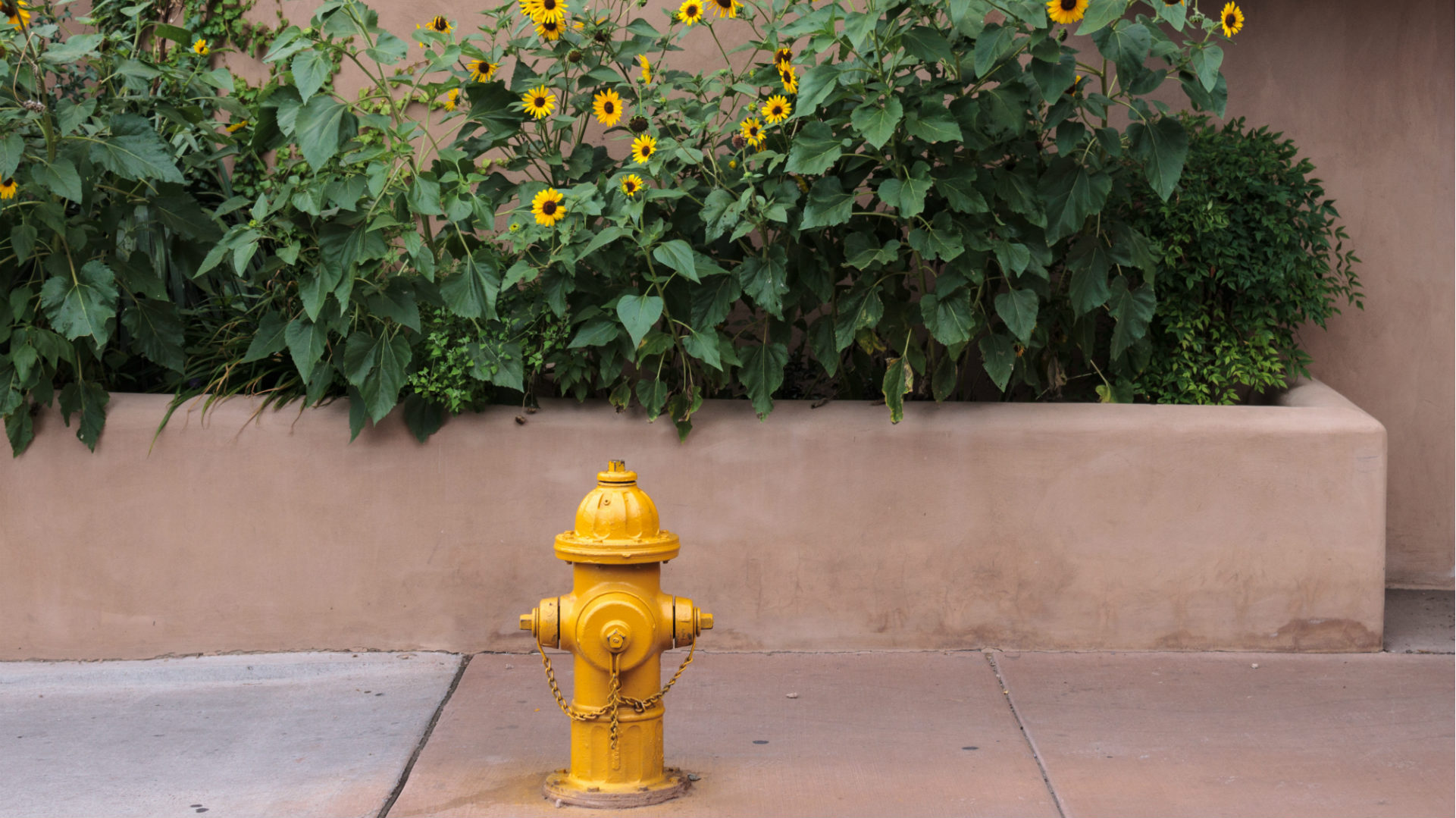 yellow water hydrant with sunflowers behind
