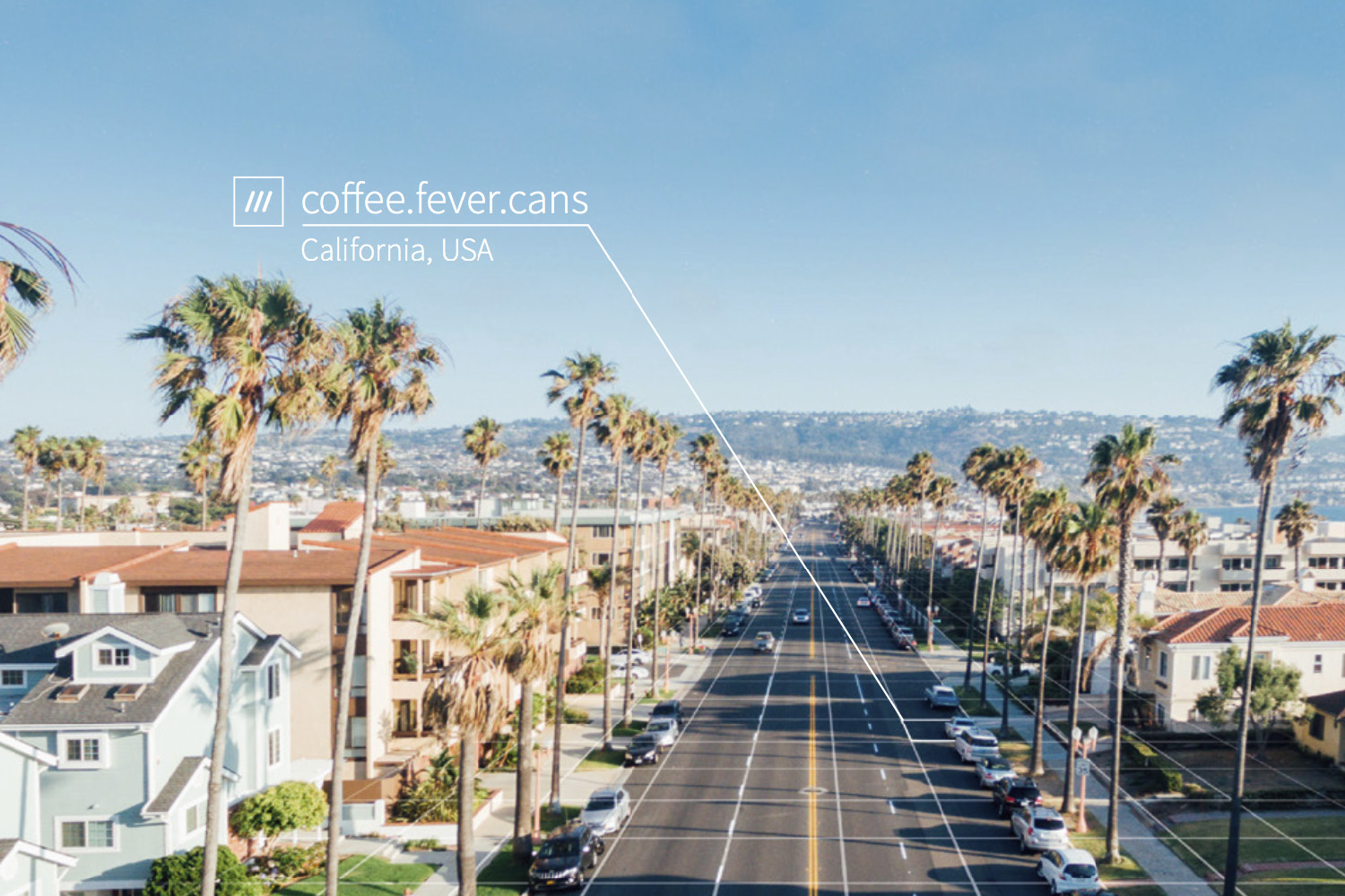 wide road with tall palm trees and houses either side at 3 word address coffee.fever.cans