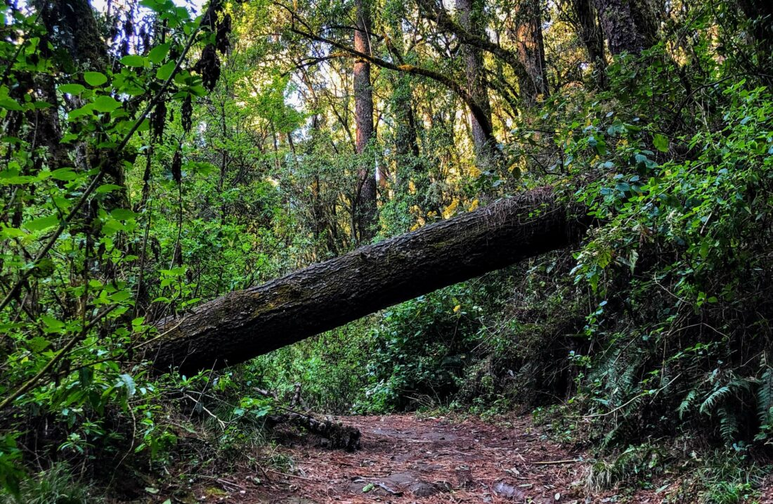 forest path blocked by fallen tree trunk