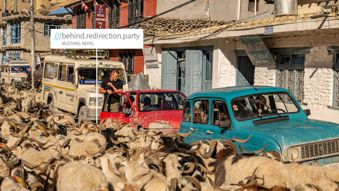 Cars stuck and surrounded by a heard of goats at 3 words address Behind.Redirection.Party