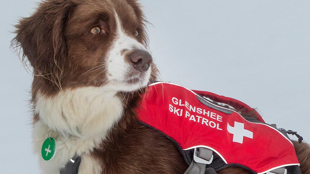 Glenshee ski patrol dog